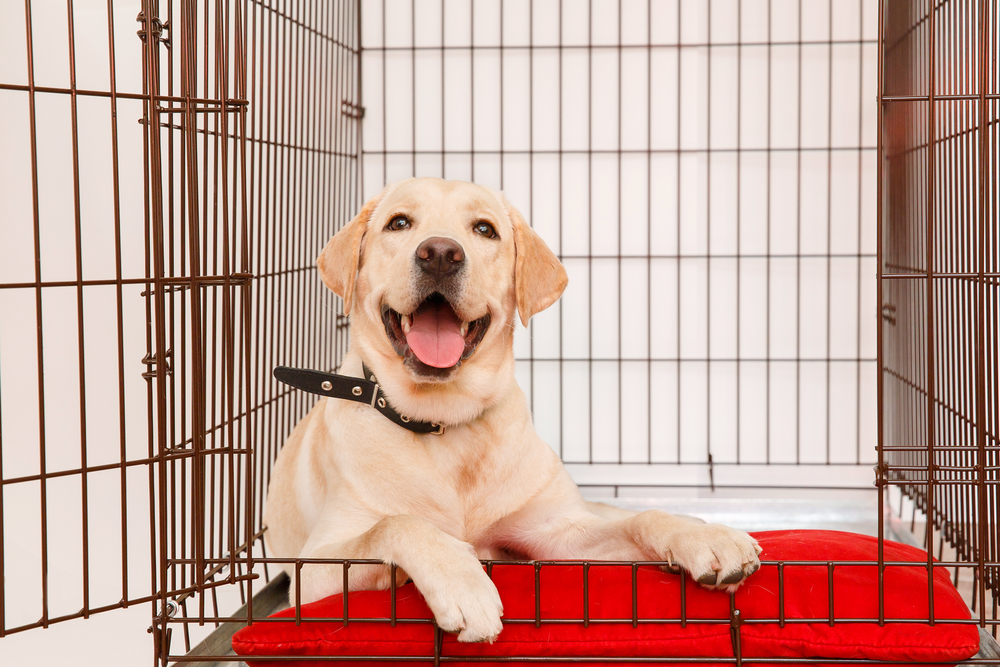Crate Training Tips - blog post image